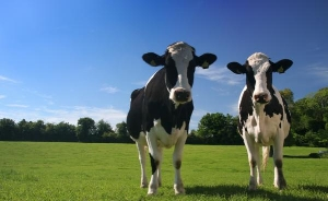 dairy-farms-for-sale