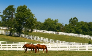 equestrian-farms-for-sale