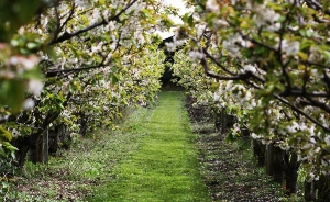 fruit-farms-for-sale