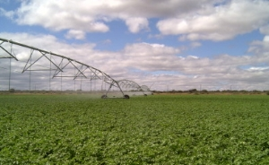 irrigation-farms-for-sale