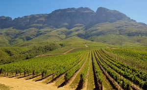 Wine farms for sale Western Cape