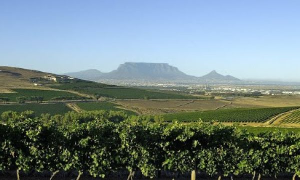 Durbanville Farms