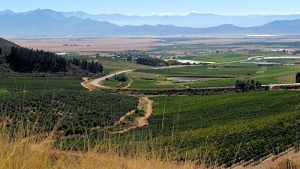 Riebeek Valley Farms