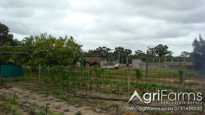 Olive, Fruit, Irrigation & Lifestyle Smallholding | AGF0275