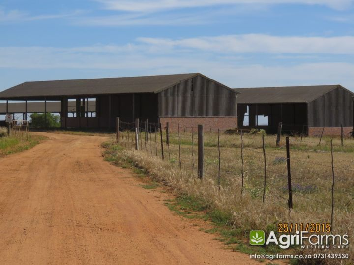 Sheep, Cattle, Wheat Farm | AGF0250