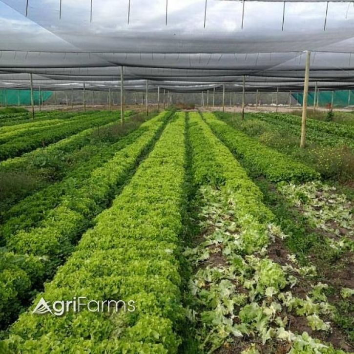 Irrigation farming with nets, Vegetable, Campsite(Guest) Smallholding | AGF0448