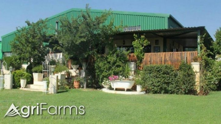 Olive grove farm with oil processing plant | AGF0386