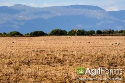 Livestock, Wheat Farm | AGF0173