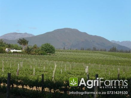 AGF0229 - Wine, Lifestyle, Irrigation & Fruit Smallholding