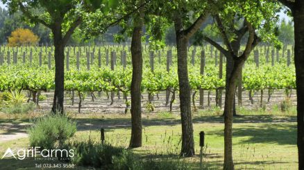 Wine Irrigation Lifestyle Smallholding | AGF0320