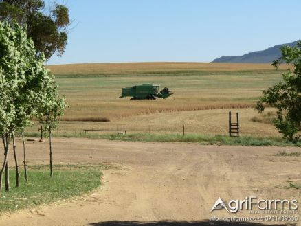 Wheat, Livestock, Irrigation Farm |AGF0279