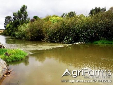 Wheat, Livestock, Irrigation, River frontage Farm | AGF0231