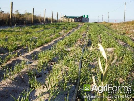 Lifestyle, Vegetable & Irrigation Smallholding | AGF0182