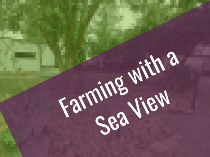 Farming with a sea view, Developer options | AGF0439