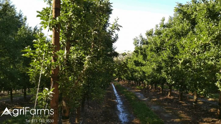 Fruit & Wine Farm on the Theewaterskloof Dam | AGF0325