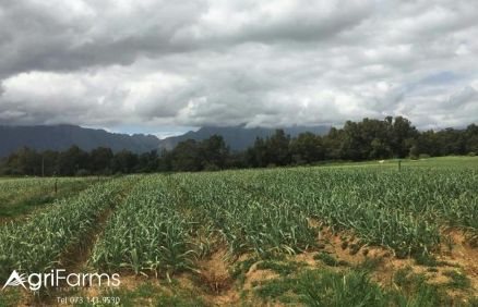 37ha Water Rights | 1.5km River Frontage| Garlic Farm | AGF0323