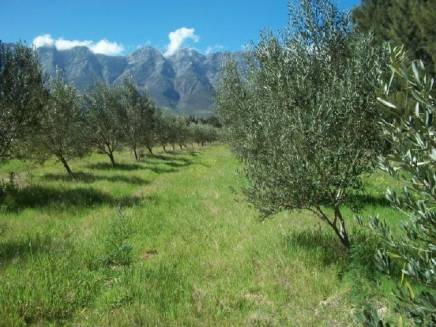 AGF0122 - Lifestyle, Olive, Irrigation & Guest Farm