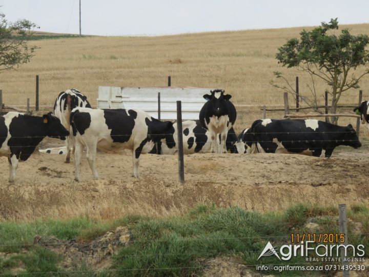 Livestock, Wheat, Irrigation, Dairy & Wine Farm | AGF0259